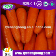2014 factory outlet Fresh carrot for hot sale