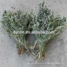 Discolor Cinquefoil Extract powder
