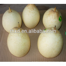 new bulk cheap pear fruit with high quality