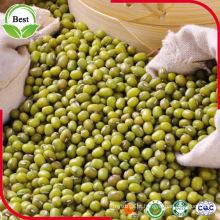 Desintoxicação! ! Feijão Mung verde de alta qualidade