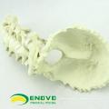 OS de SIMULATION de vente en gros 12322 Os anatomique cervical occipital cervical d'anatomie médicale, orthopédie pratique os de simulation