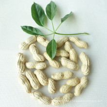 Supply New Bulk Raw Peanut Red Kernel, Wholesale, Raw Peanuts Prices