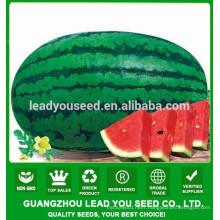 NW03 Jinchan oblong shape hybrid F1 watermelon seeds supplier