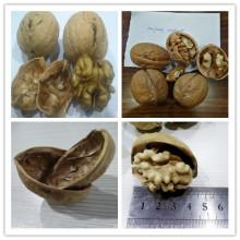 Whole Walnut In-Shell