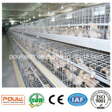 Pullet Netting/Chicken Wire Mesh/Pullet Farm Cage