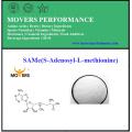 Naturel de haute qualité identique (S-adénosyl-L-méthionine) pour le culturisme