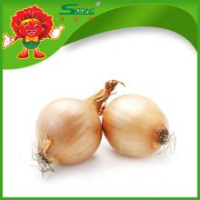 Cebollas frescas ROJAS / AMARILLAS
