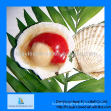 Japan original frozen half shell scallop