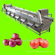 apple sorting machine/equipment/plant