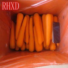 chinese vacuum pack fresh carrots for sale