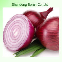 Chinese Small Red Onion with Mesh Bag