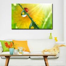 Coccinella Septempunctata Animal Canvas Prints from own digital photos