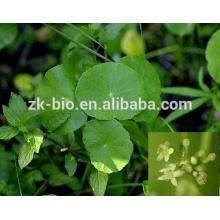 100% Natural Extracto de Hierba de Gotu Kola Asiaticoide