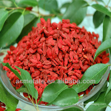 Wholesale Top quality Chinese dried red medlar berries