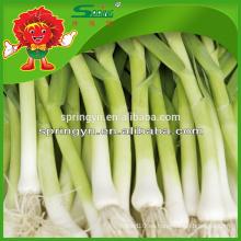 El ajo estupendo de la venta CALIENTE brota el bolso neto para la especificación del ajo de los brotes del ajo