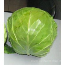 Cruciferous Vegetable cabbage good health cabbage
