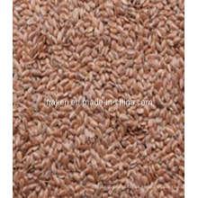 Lignans et Baicalin de graines de lin