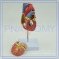 PNT-0400 Meilleur prix de Anatomie Formation Coeur Modèle de haute qualité