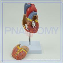 Modèle d'anatomie cardiaque en plastique PNT-0400
