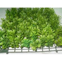 Моделирование растения