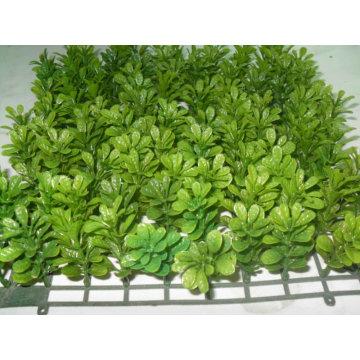 Les plantes de simulation