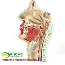 THROAT05 (12511) Human HNO Physiologie Nasenkanal Anatomie Modell der Nase Hals