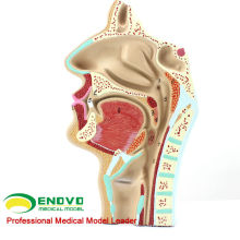 THROAT05(12511) Human ENT Physiology Nasal Cross Section Anatomy Model of Nose Throat