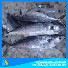 Maquereau de poisson congelé