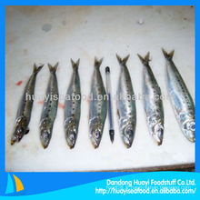 Sardines fraîches sardine congelée