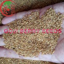 Заводское снабжение Высокое качество Goji Семена ягод для растений