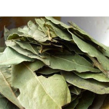 Dry Bay Leaf, Myrcia,