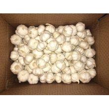 2016 Year Pure White Garlic in Coldroom