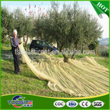 agriculture olive harvest nets to collection fruit