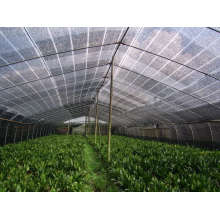 Sonnenschirm als Green House Net