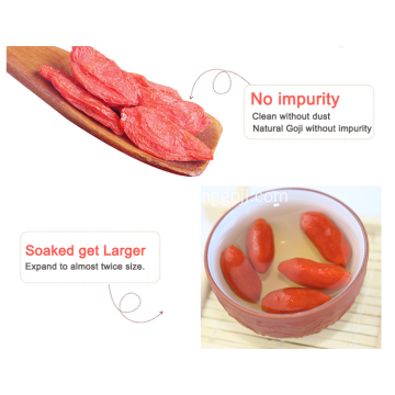 High Quality Fresh Conventional Dried Goji Berry