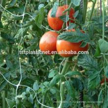 Tomatengitternetz (UV-stabilisiert)
