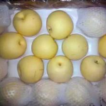 Hebei Golden Fresh Pear