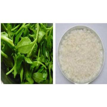 Andrographis Paniculata P. E / Andrographolide Extrato de 98% HPLC / Andrographis Paniculata / Andrographolide