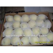 Chinese Ya Pear(36-40-44 in 9kg ctn)