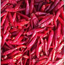Getrockneter Chili