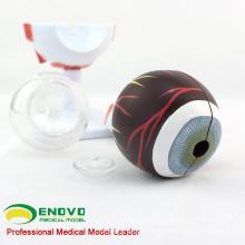 EYE02(12526) медицинский анатомии модель 6-частей модель глаза