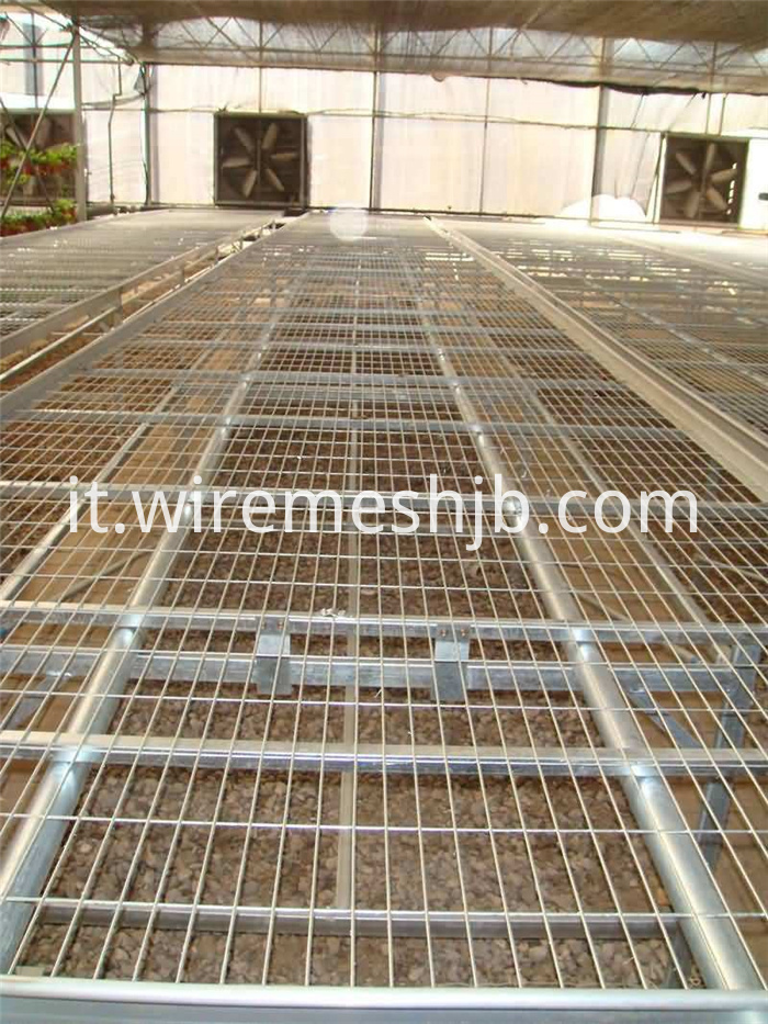 Galvanized Welded Mesh Sheets