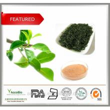 Am besten Natürliche Extrakt des grünen Tees, der mit Tee-Polyphenol-Koffein-Aminosäuren bescheinigt wird