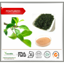Best Natural Green Tea Extract Brand Certificated With Tea Polyphenols Caffeine Amino Acids