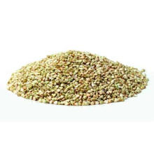 Venta caliente 100% Natural Rhizoma Dibotryis Extracto