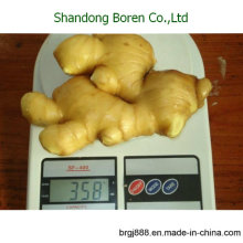 2015 Hot Sale Fresh Ginger New Crop Natrual Ginger
