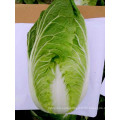 wholesale shandong carrot cabbage prices export to Sri Lanka