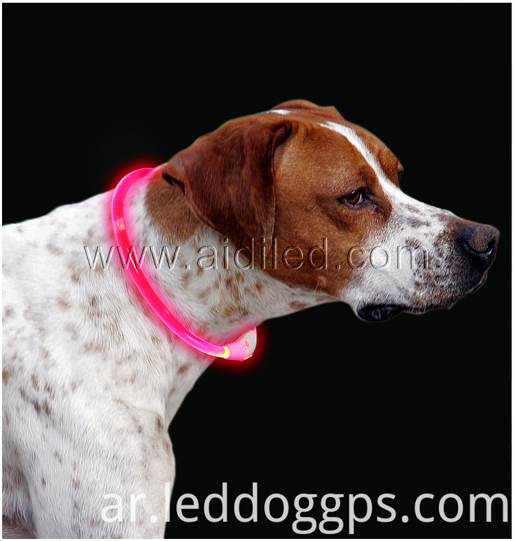 Colorful Shiny Dog Collar