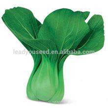 PK11 Huaguan very ealry maturity f1 hybrid pakchoi seeds, hybrid rape seeds