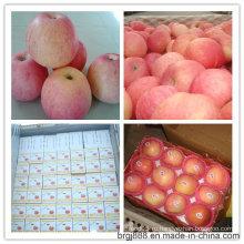 Новое свежее яблоко FUJI 2015